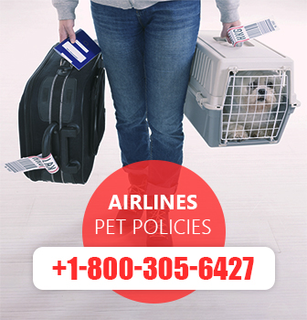 American Airlines Pet Policy and Reservations